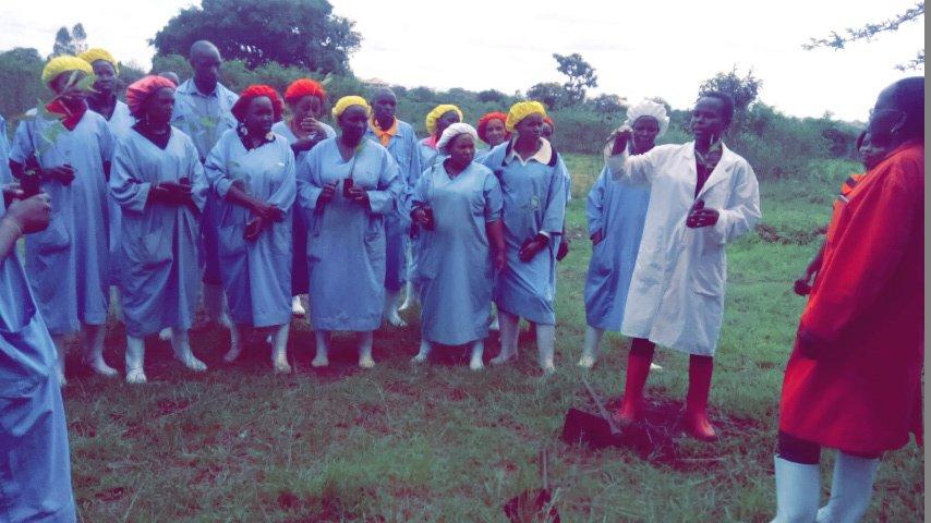 Tree Planting Project